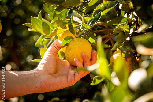 Fotografija laranja no pé