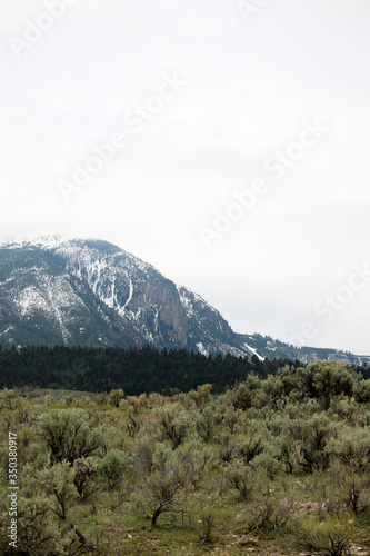 Sagebrush Forest and Snowy Mountain