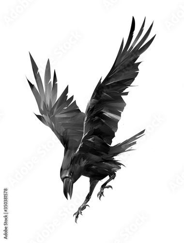 malowane kruk atakujący ptak na białym tle