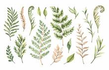 Botanical Watercolor Clipart. ...