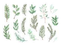 Watercolor Vector Illustration. Botanical Frame With Eucalyptus, Fir Branches And Leaves. Greenery Winter Florals. Floral Design Elements. Perfect For Wedding Invitation, Card, Print, Poster, Packing