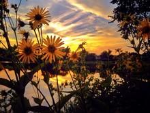 Yellow Flowers On Lakeshore