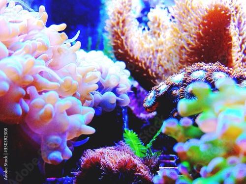Fotografia Undersea View Of Corals