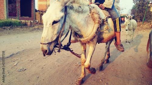Valokuva Man Riding Donkey On Dirt Road Of Village
