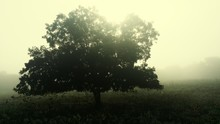 Tree Growing On Field During Foggy Weather