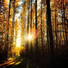 Trees Growing In Forest Against Bright Sun During Autumn