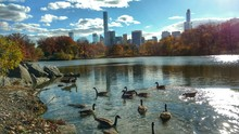 High Angle View Of Canada Geese Swimming On Lake Against Cityscape