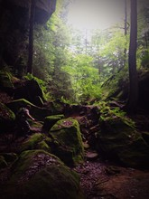 Moss Covered Rocks In Forest