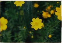 Focus On Yellow Wildflower