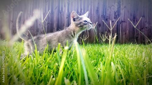 Fotografia Cat Walking On Grassy Field