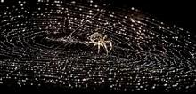 Close-up Of Spider On Wet Web Against Black Background