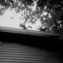 Squirrel On Roof In Sunlight