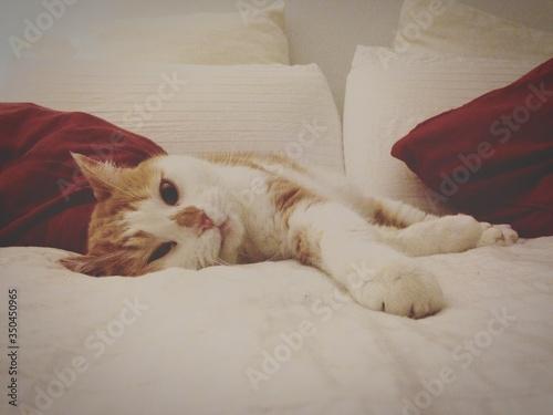 Portrait Of Ginger Cat Lying On Bed In House Fototapet