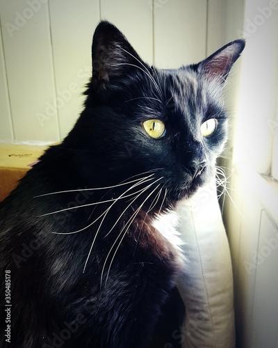 Canvastavla Close-up Of Black Cat At Home