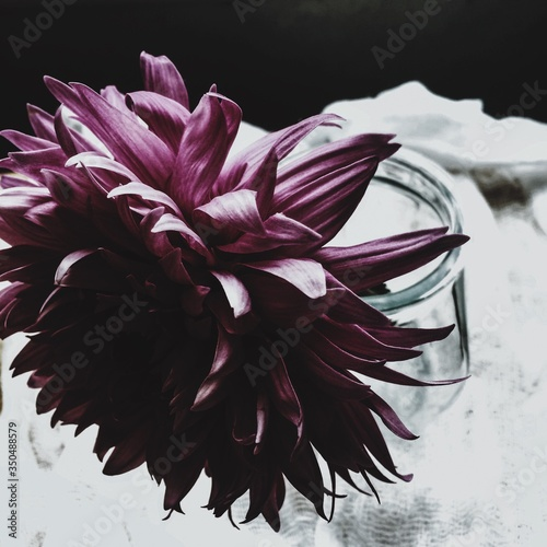 Fototapeta Close-up Of Purple Dahlia