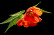 exotic flower closeup