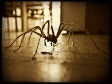 Close-up Of Spider On Floor