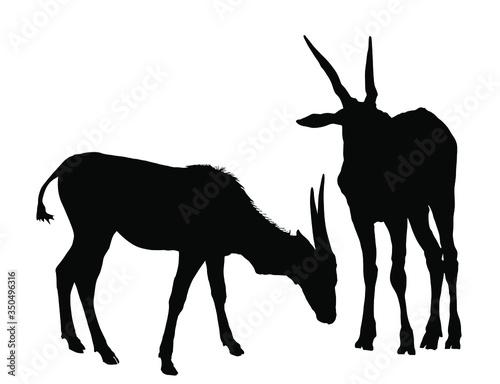 Couple of wild female antelope Common eland, or Southern eland vector silhouette Fototapet