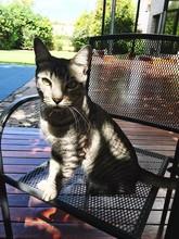 Portrait Of Cat Sitting On Cha...