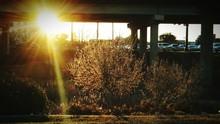 View Of Sun Under Bridge