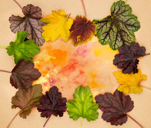 Various Types Of Coral Bells H...