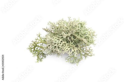 Fotografia Tree moss isolated on white background