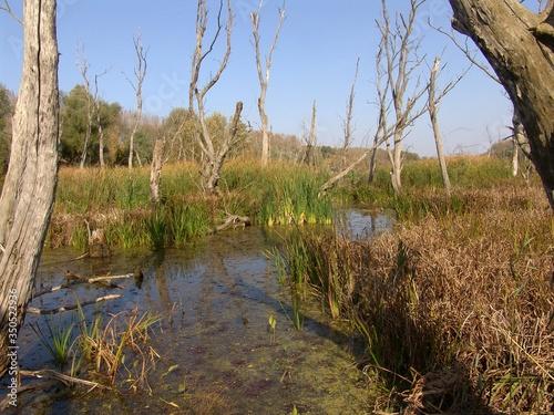 Fotografie, Tablou Reeds Growing On Marshland