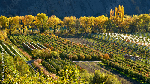 Orchards (apple and pear trees) in autumn near the village of Remollon Canvas Print
