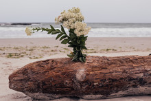 A Bouquet Of White Wildflowers Is Inserted Into A Brown Log On The Background Of The Sea