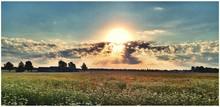 Sun Shining Over Cow Parsley Meadow