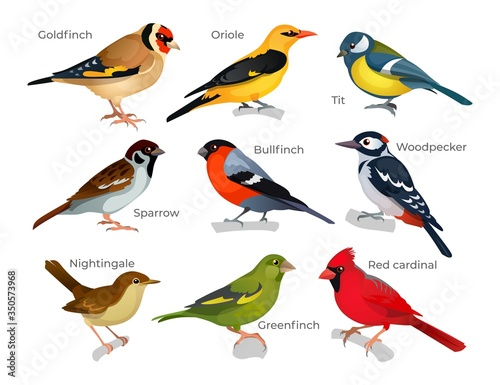 Valokuva Set of various birds types with inscription vector illustration