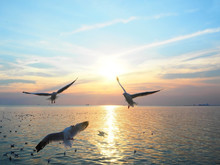 Seagulls Flying Above Sea At Sunset