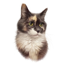 Cute Cat. Portrait Of A Tri-co...