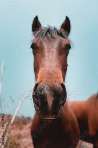 Photo caballo mirando la camara