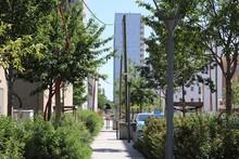 La Rue Albert Jacquard, Rue Bordée D'arbres Et D'immeubles Modernes Dans Le Quartier De La Duchère à Lyon 9 ème  - Ville De Lyon - 9 ème Arrondissement - Département Du Rhône - France