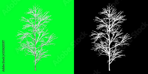 Valokuvatapetti Front View Winter Tree 3D Render PNG Chroma Key Bakcground with Opacity Map for