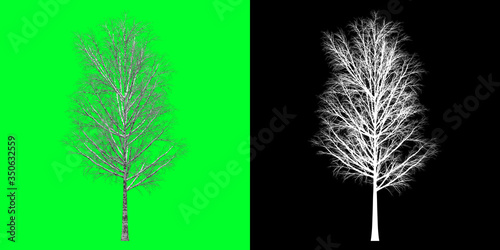 Fototapety, obrazy: Left View Winter Tree 3D Render PNG Chroma Key Bakcground with Opacity Map for Cutout Compositing