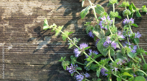 Squaw mint, Mentha pulegium, commonly (European) pennyroyal, also called mosquito plant and pudding grass. vintage wooden background #350638963
