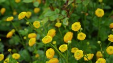 Small Yellow Flowers With Gree...