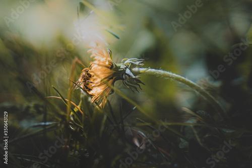 Fotografie, Tablou abeille