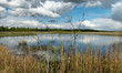 a developed bog lake, swampy meadows and bogs wonderful cumulus clouds and reflections in the water, Sedas heath, Latvia
