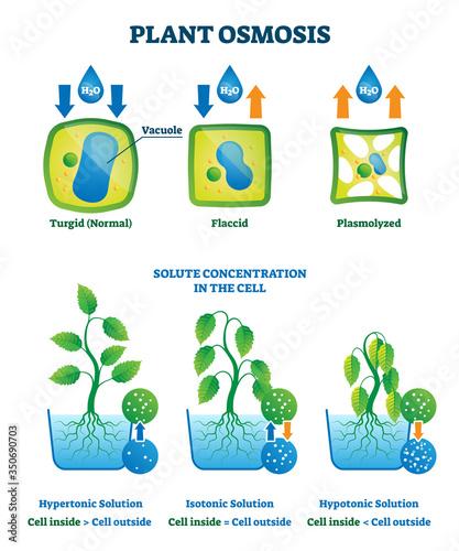 Photo Plant osmosis vector illustration