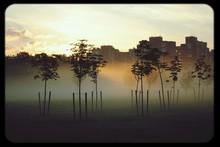 Morning Mist In Park