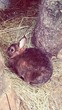 High Angle View Of Rabbit On Hay Straw