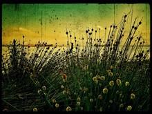 Flowers Growing By Lake
