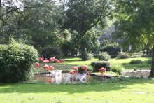 Flamingos In Pond At Park