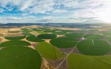 Green Crop Circles Grow In A R...