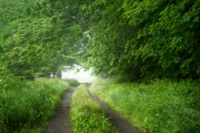 Foggy Farm Road Surrounded By Spring Green Foliage