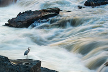 Rushing Rapids At Mather Gorge Near Washington DC