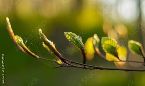 Gałązka podświetlona z liśćmi Obraz na płótnie